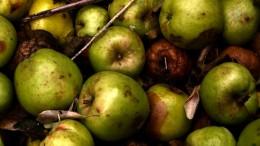 corrupcion manzanaspodridas recursoTC