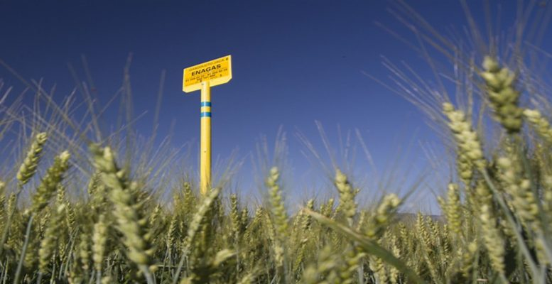 enagas increase holding in Tallgrass