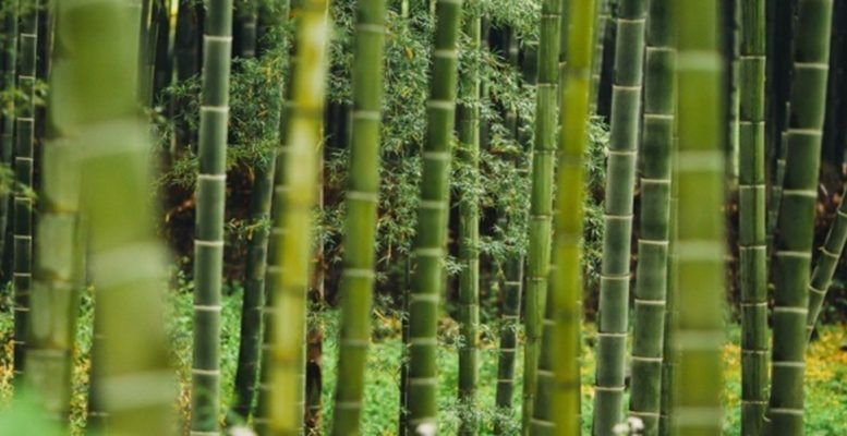 plant grass bamboo forest environment growth