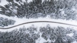 forest drone view winter