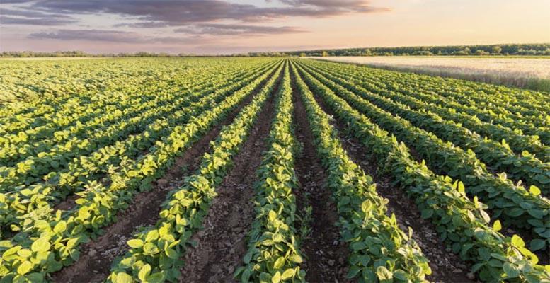 EU agriculture 2