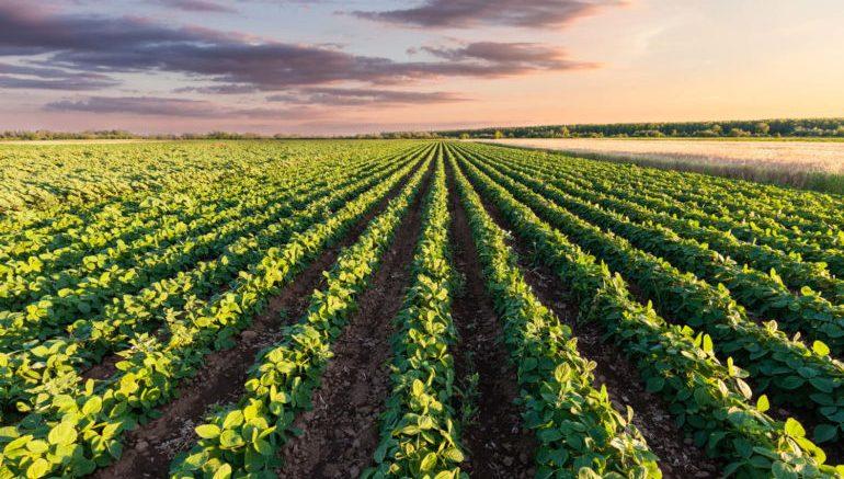 EU agriculture