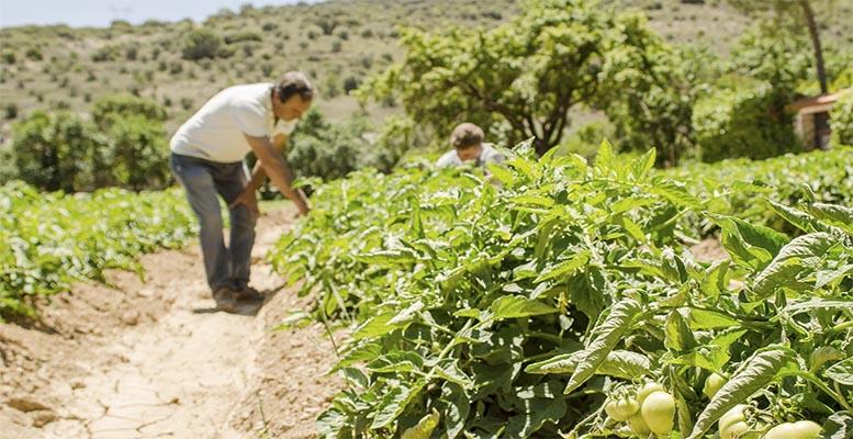 Spain countryside